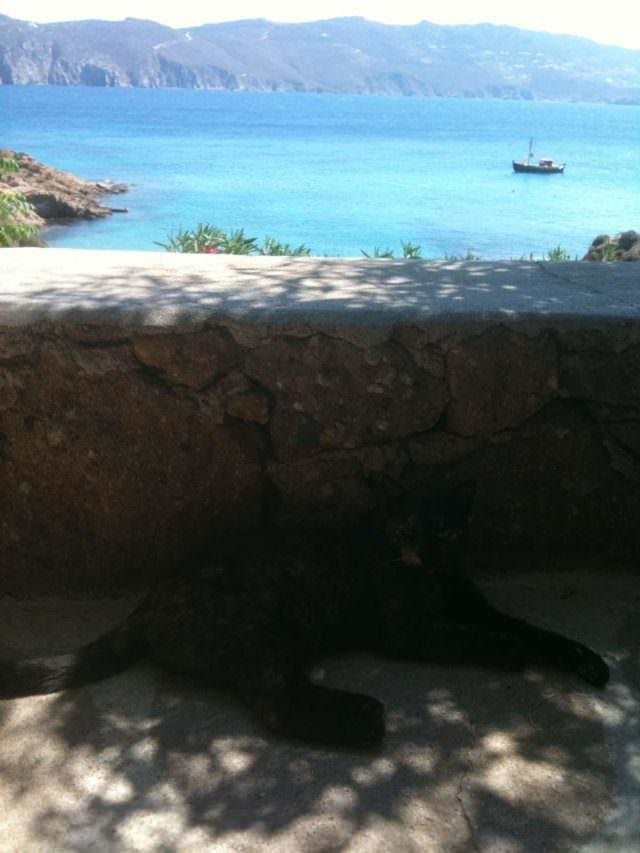 Gatto di un chiosco in Grecia