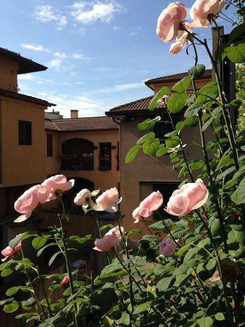 Rose inglesi sul mio balcone