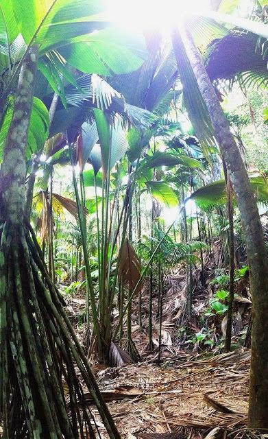 Foresta delle Seychelles