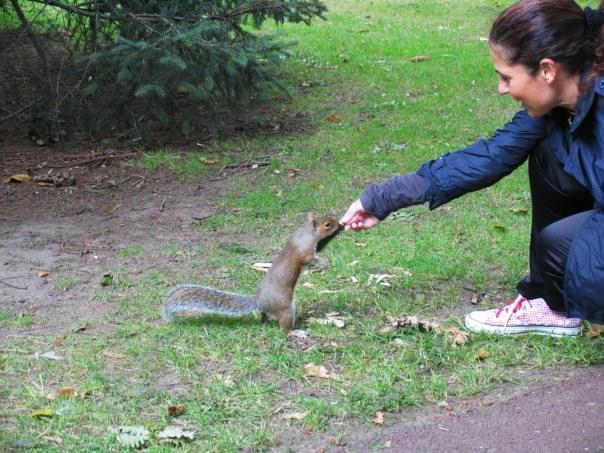 Scoiattolo nel parco
