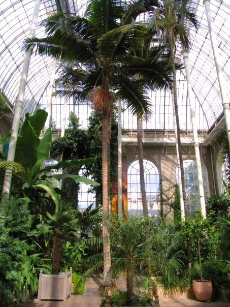 Interno serra del parco botanico di Edimburgo